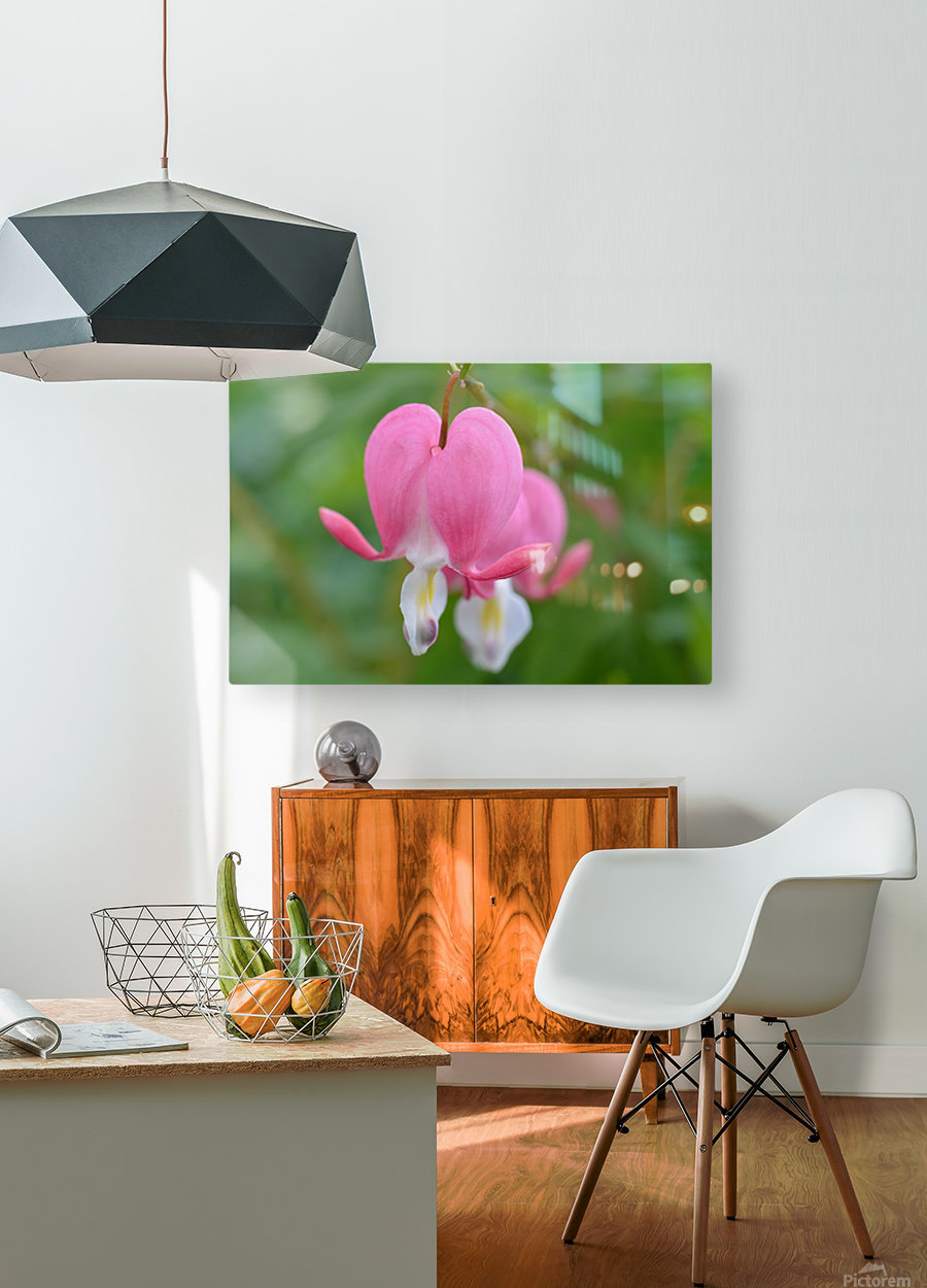 Bleeding Heart Flower Photograph  HD Metal print with Floating Frame on Back