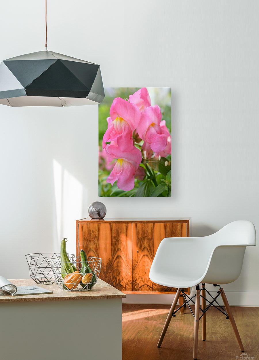 Pink Snapdragon Photograph   HD Metal print with Floating Frame on Back