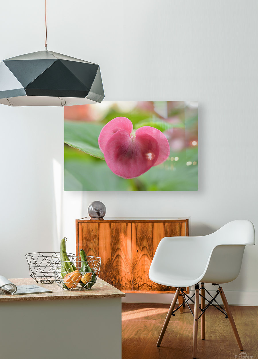 Heart Shape Pink Flower Photograph  HD Metal print with Floating Frame on Back