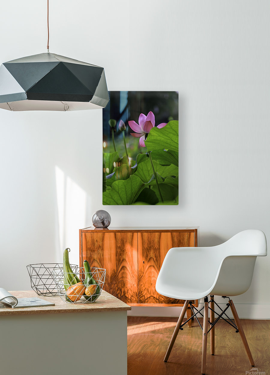 Lotus  HD Metal print with Floating Frame on Back