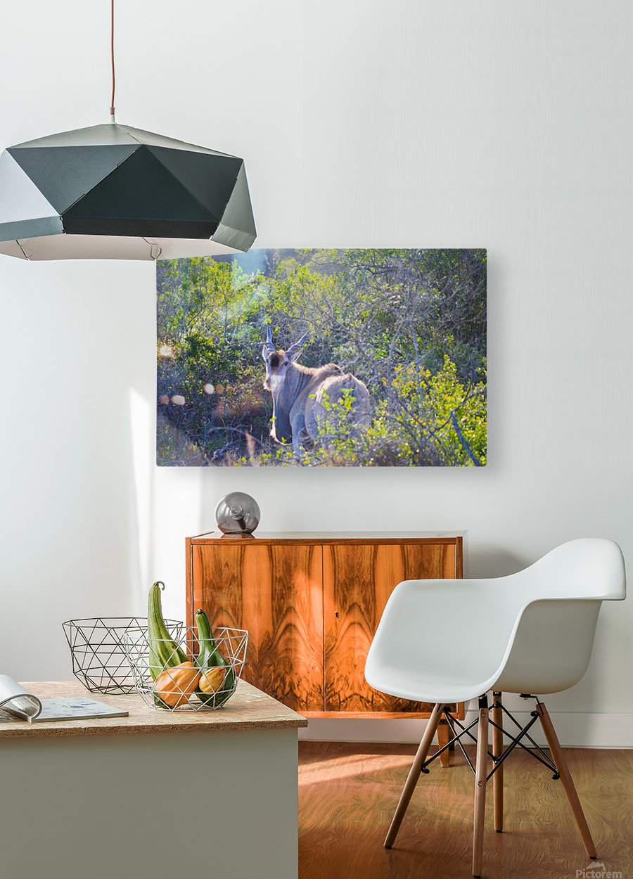Deer Posing for Photo  HD Metal print with Floating Frame on Back