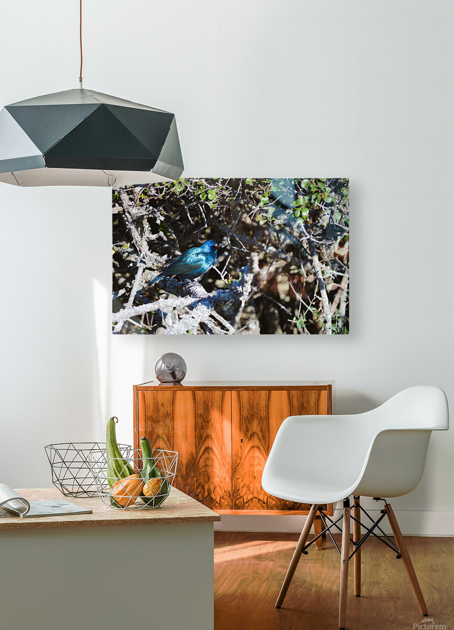Blue Reflective Bird  HD Metal print with Floating Frame on Back