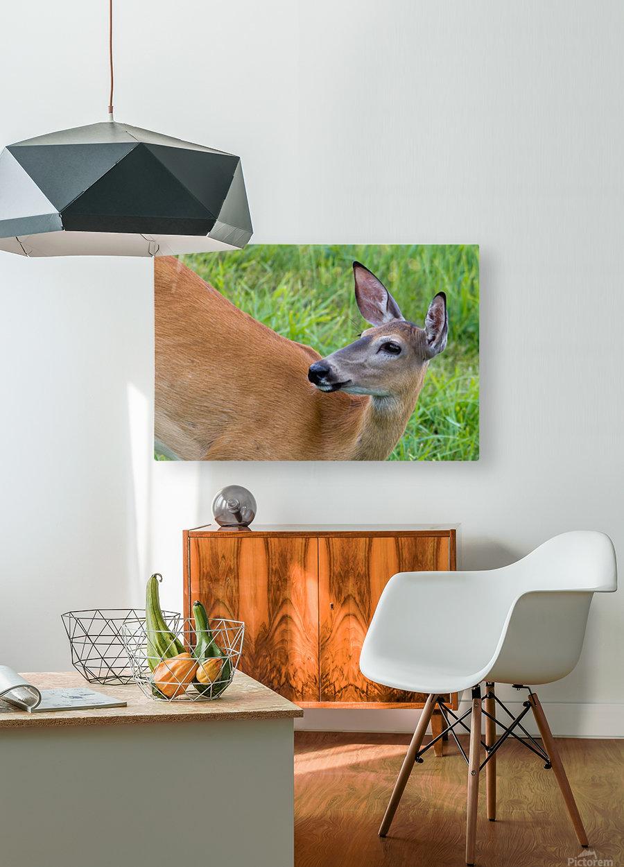 Summer Doe  HD Metal print with Floating Frame on Back