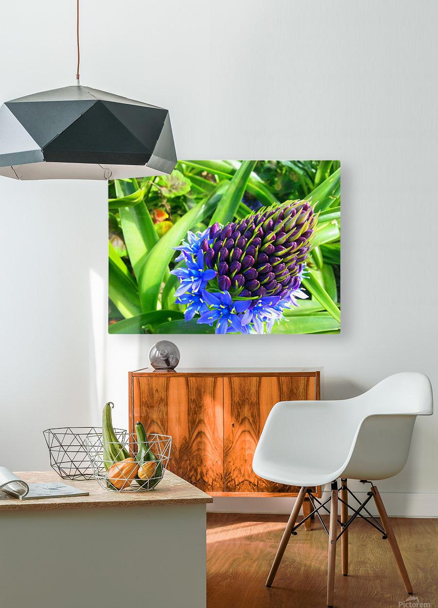 Blue Flower  HD Metal print with Floating Frame on Back