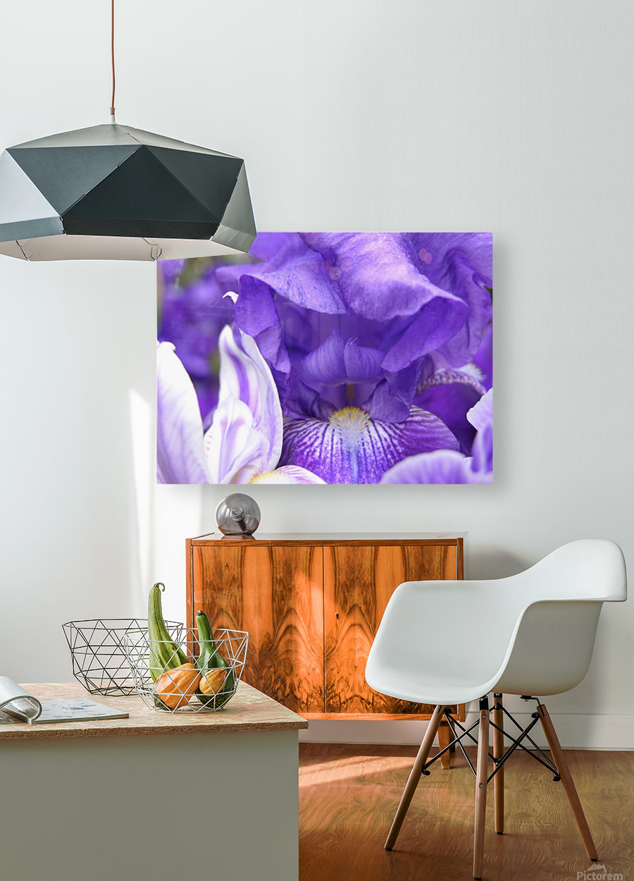 Blue Iris Photograph  HD Metal print with Floating Frame on Back