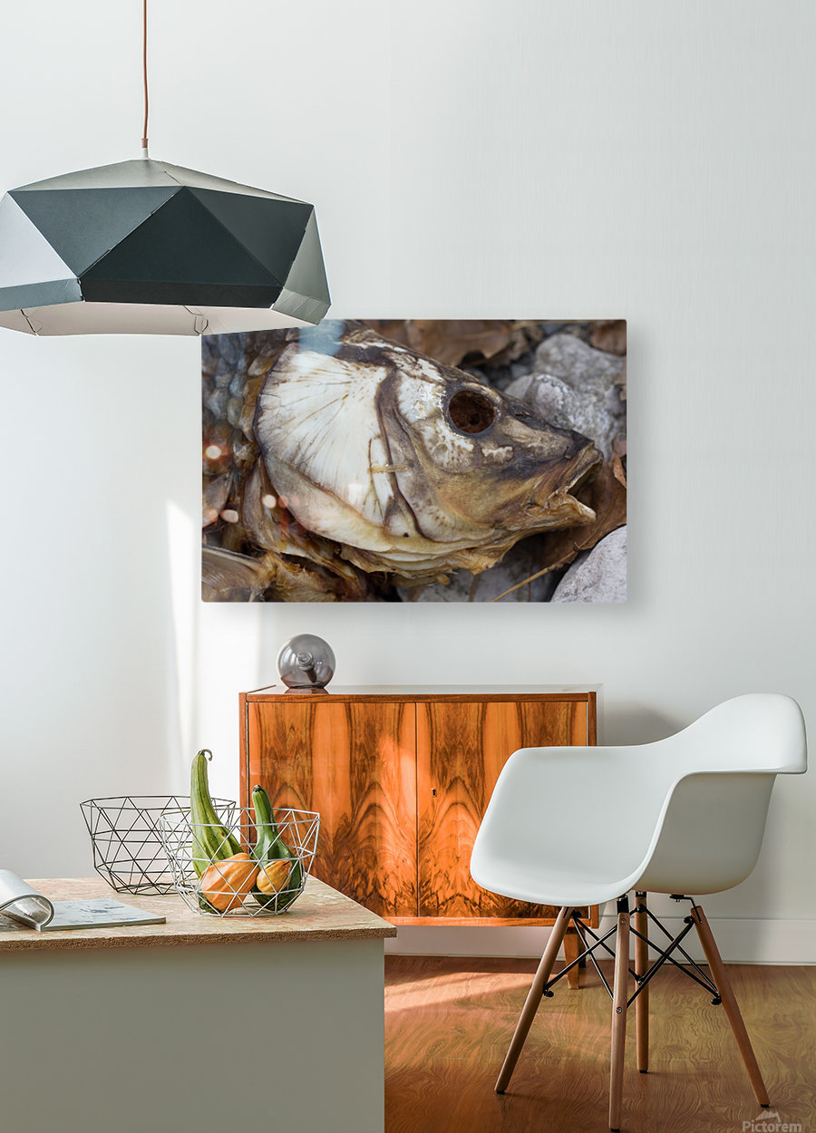 Carp no More  HD Metal print with Floating Frame on Back