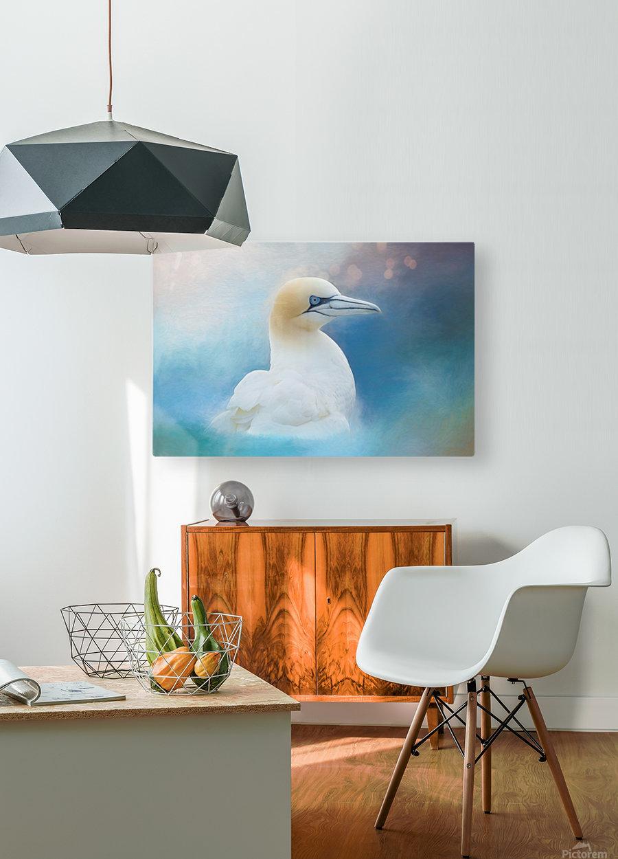 Northern Gannet ver2  HD Metal print with Floating Frame on Back