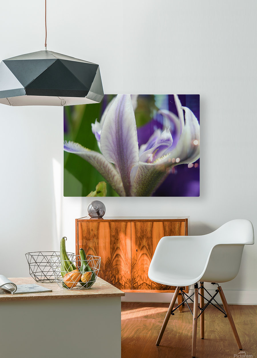 Purple Flower Photography  HD Metal print with Floating Frame on Back