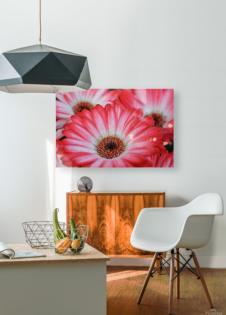 Red & White Flower Photograph  HD Metal print with Floating Frame on Back