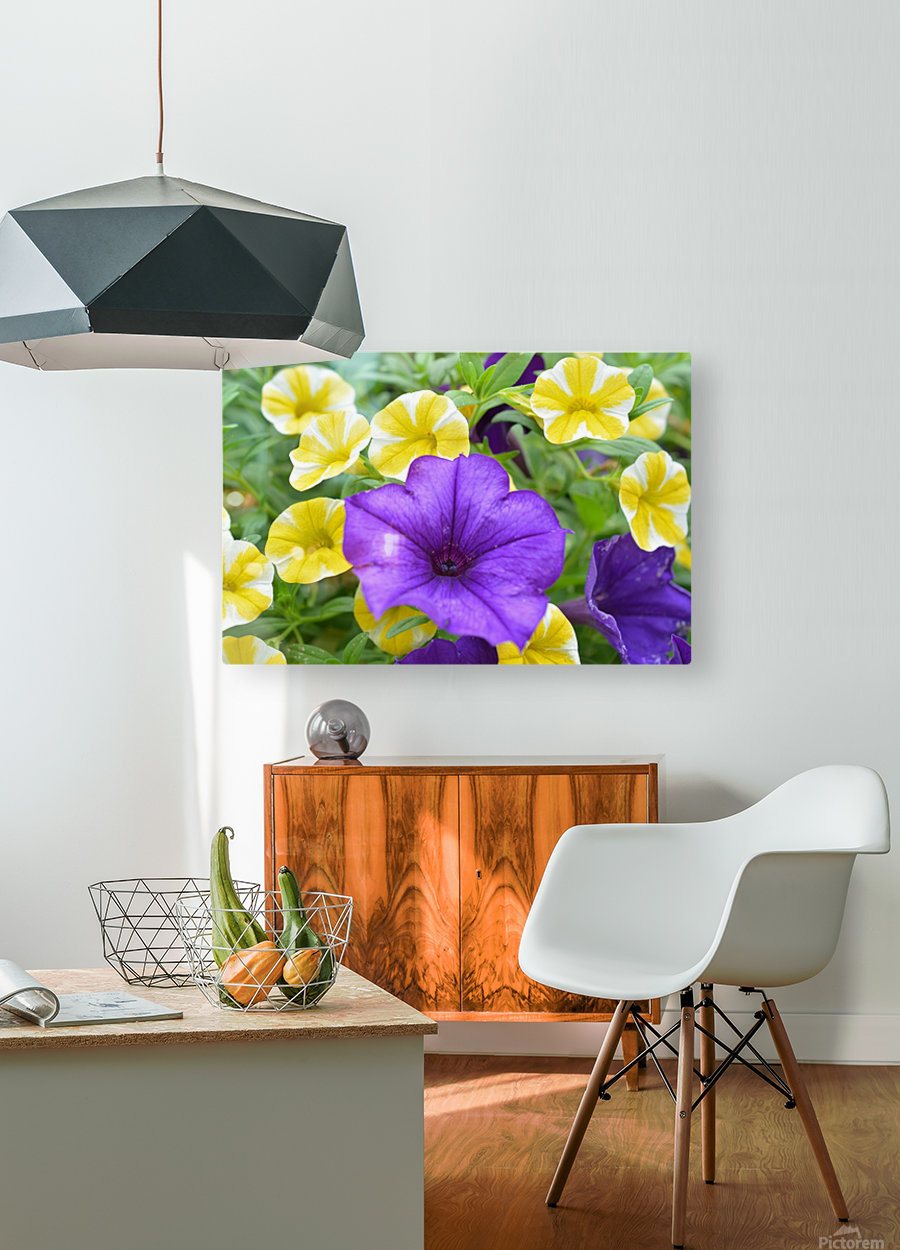 Beautiful Blue Flower In Yellow Flower Garden Photograph  HD Metal print with Floating Frame on Back