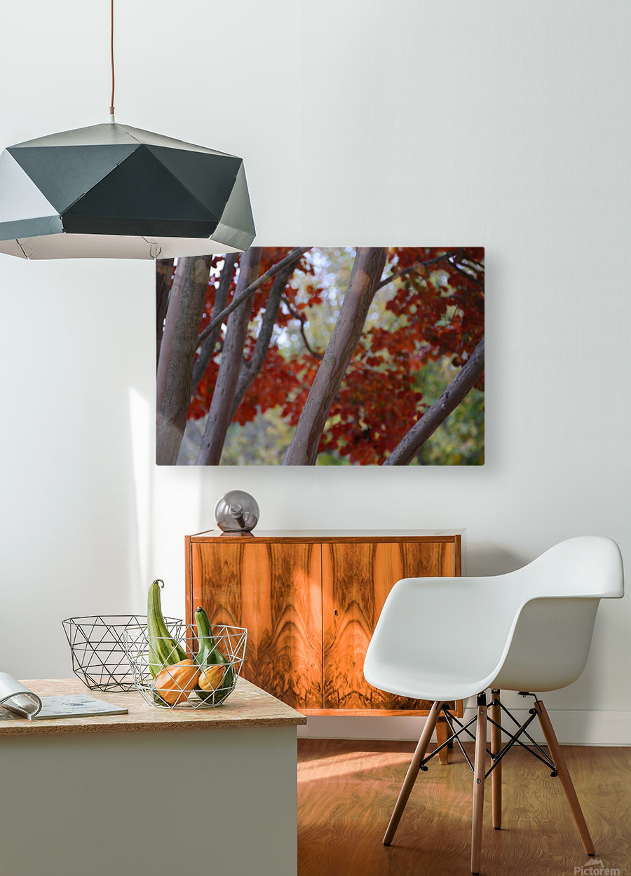 Fall Foliage Photograph  HD Metal print with Floating Frame on Back