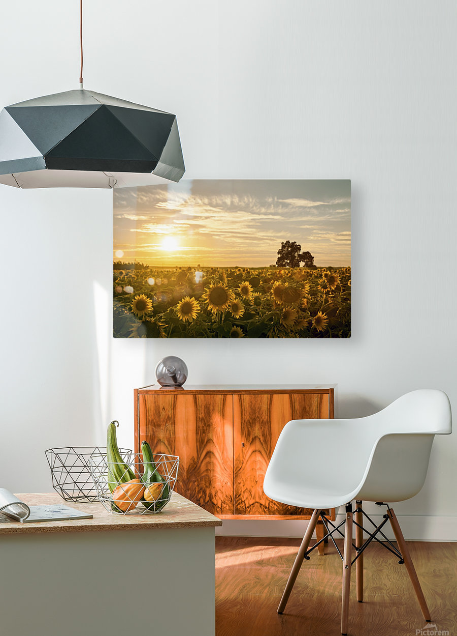 facing the sun  HD Metal print with Floating Frame on Back