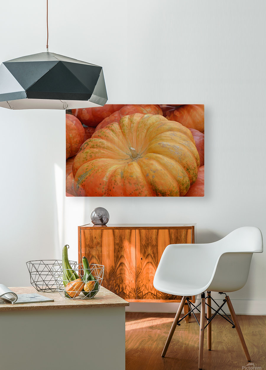 Beautiful Pumpkins Photograph  HD Metal print with Floating Frame on Back