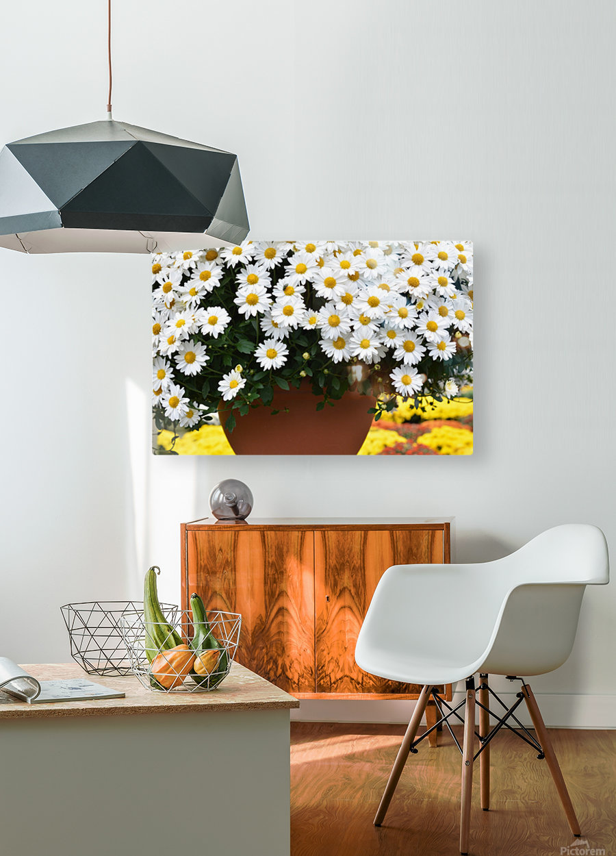 Beautiful White Flowers In A Hanging Basket Photograph  HD Metal print with Floating Frame on Back