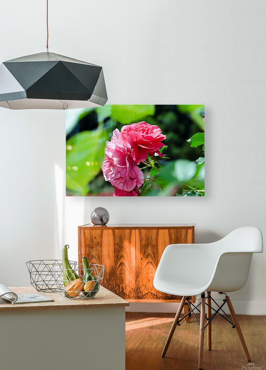 Rose Name  HD Metal print with Floating Frame on Back