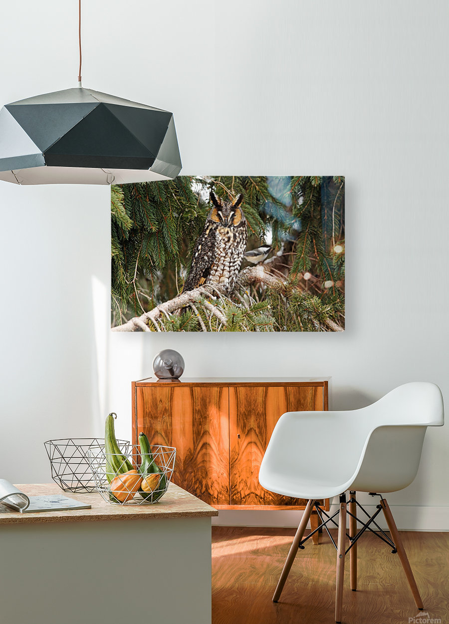 Brave Chickadee  HD Metal print with Floating Frame on Back