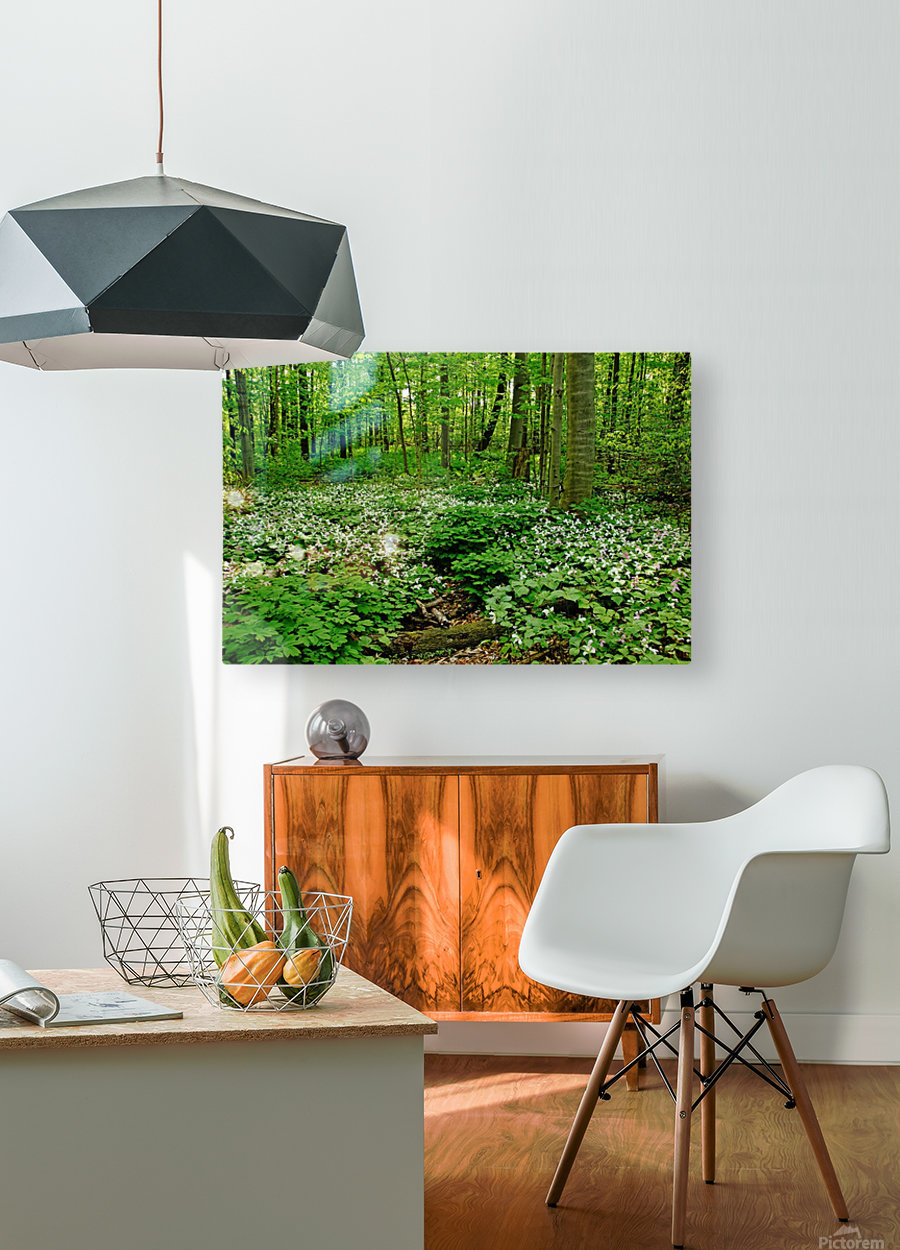 Trillium Woods VI  HD Metal print with Floating Frame on Back