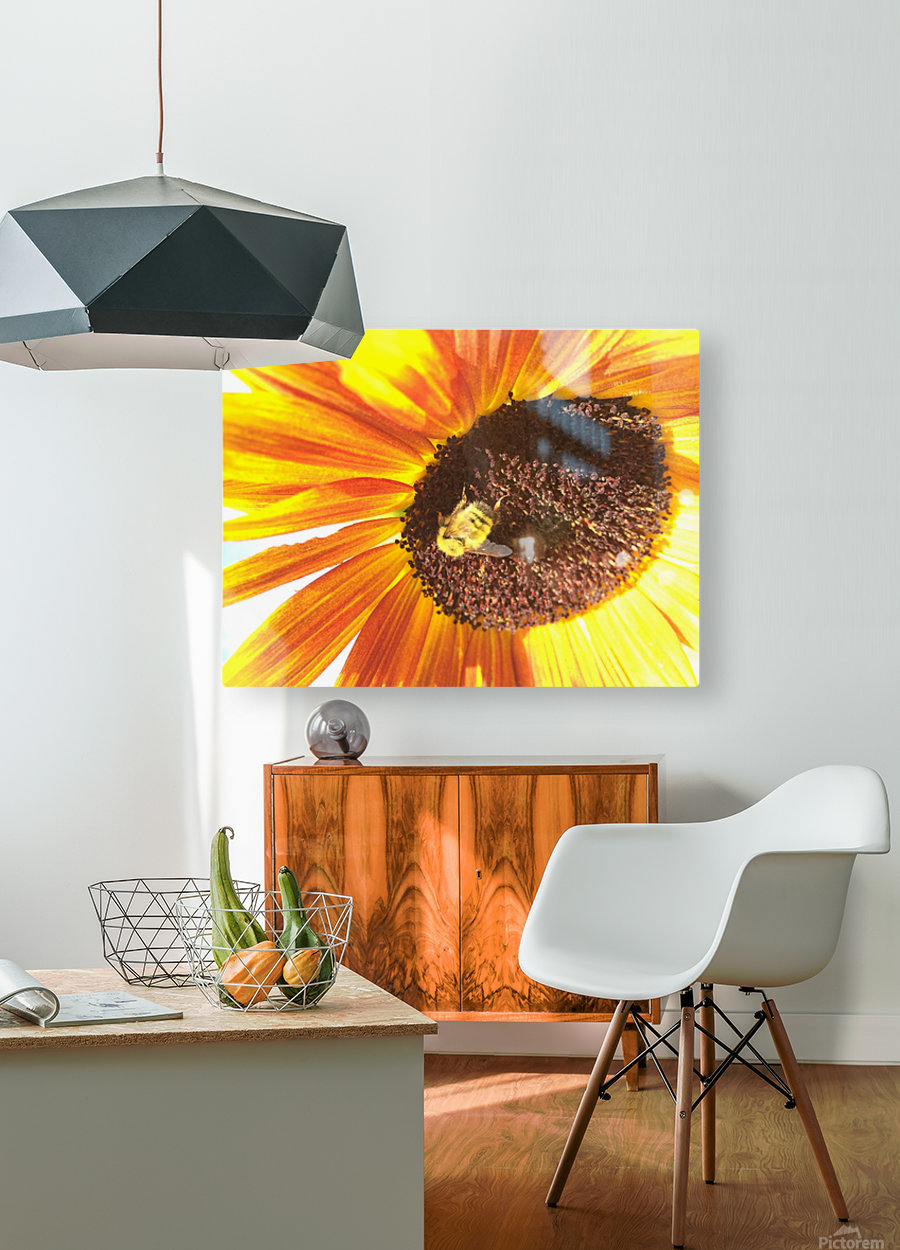 Bumblebee on Sunflower  HD Metal print with Floating Frame on Back