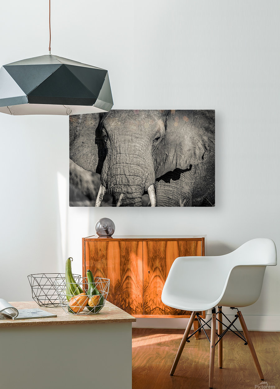 Elephant Portrait  HD Metal print with Floating Frame on Back