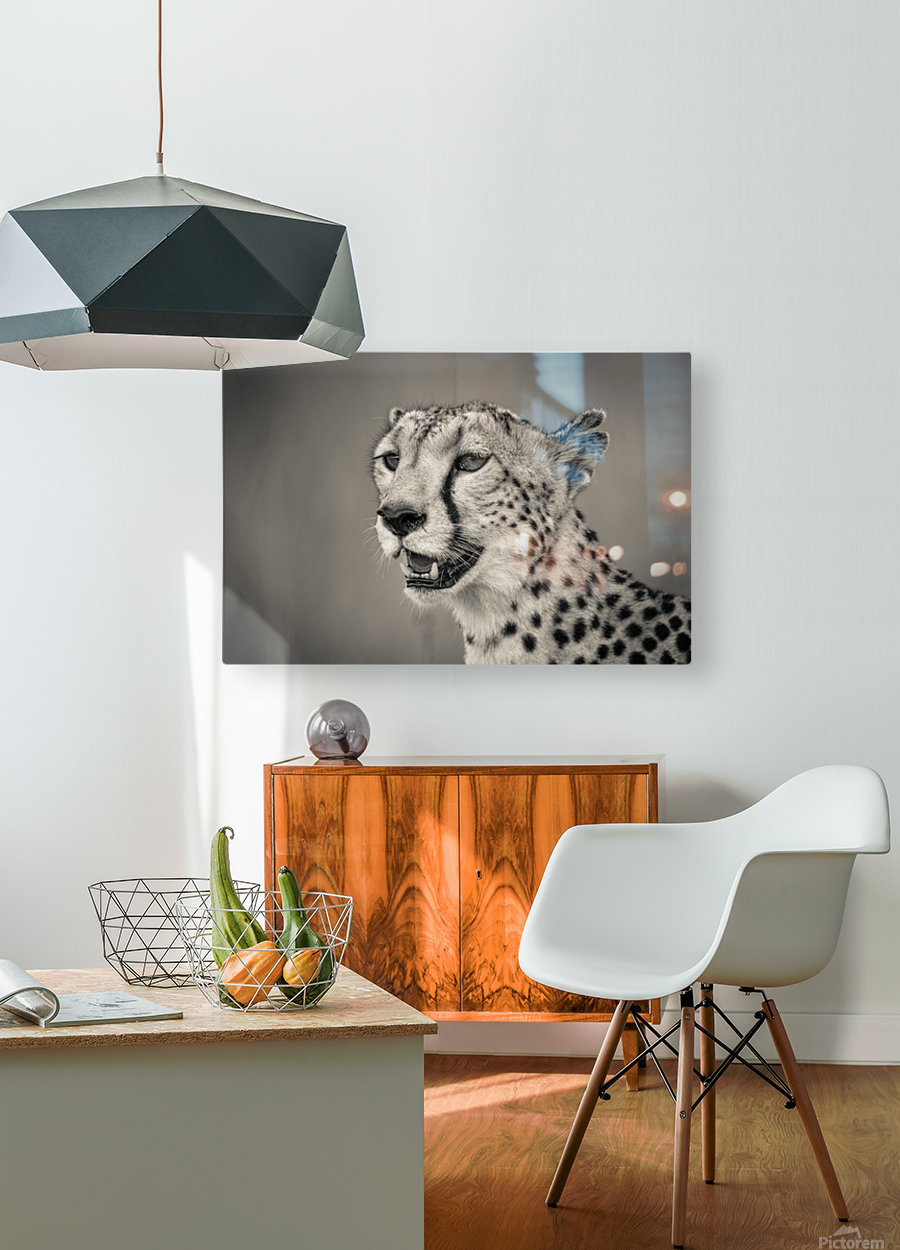 Cheetah Portrait  HD Metal print with Floating Frame on Back