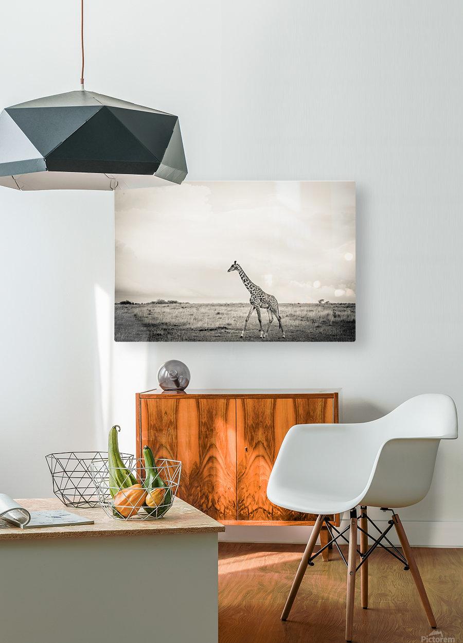 Zebrascape  HD Metal print with Floating Frame on Back