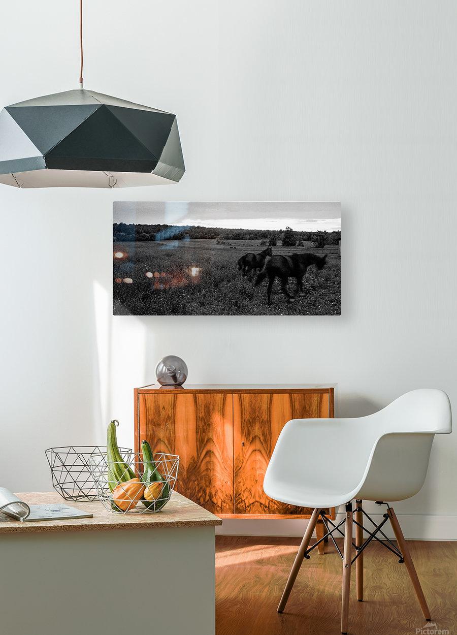 Horses in the Field  Impression métal HD avec cadre flottant sur le dos
