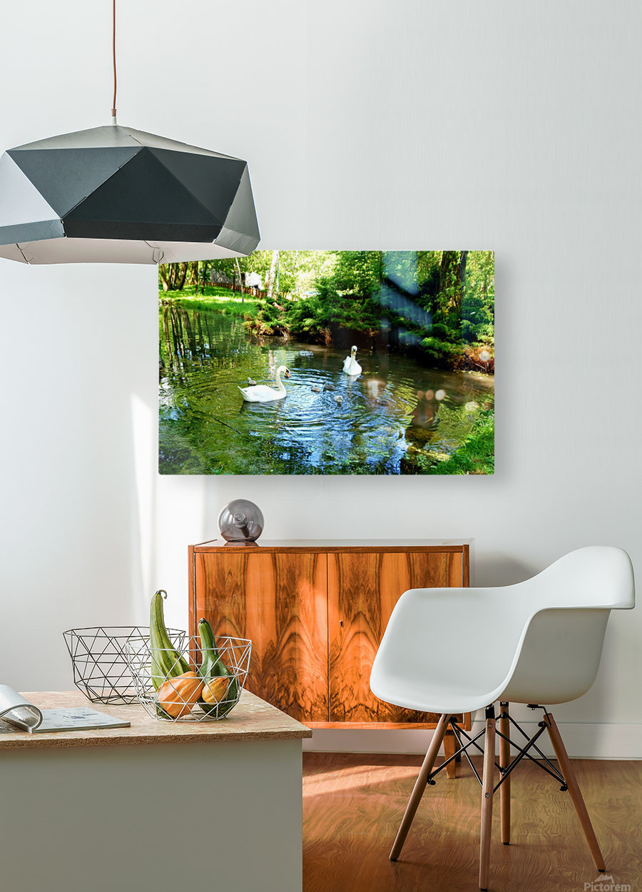 swan 11  HD Metal print with Floating Frame on Back