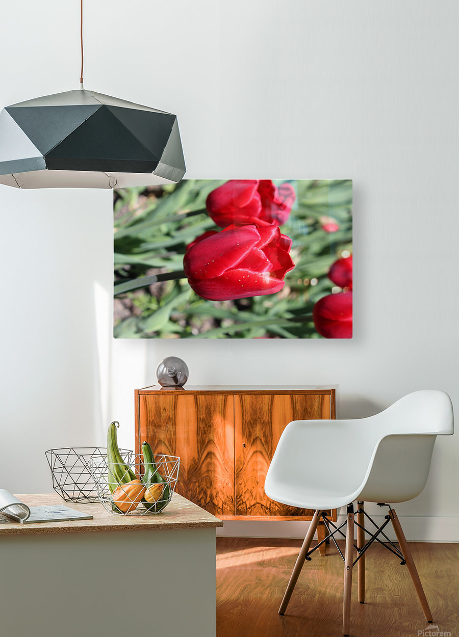 Tulips Red  HD Metal print with Floating Frame on Back