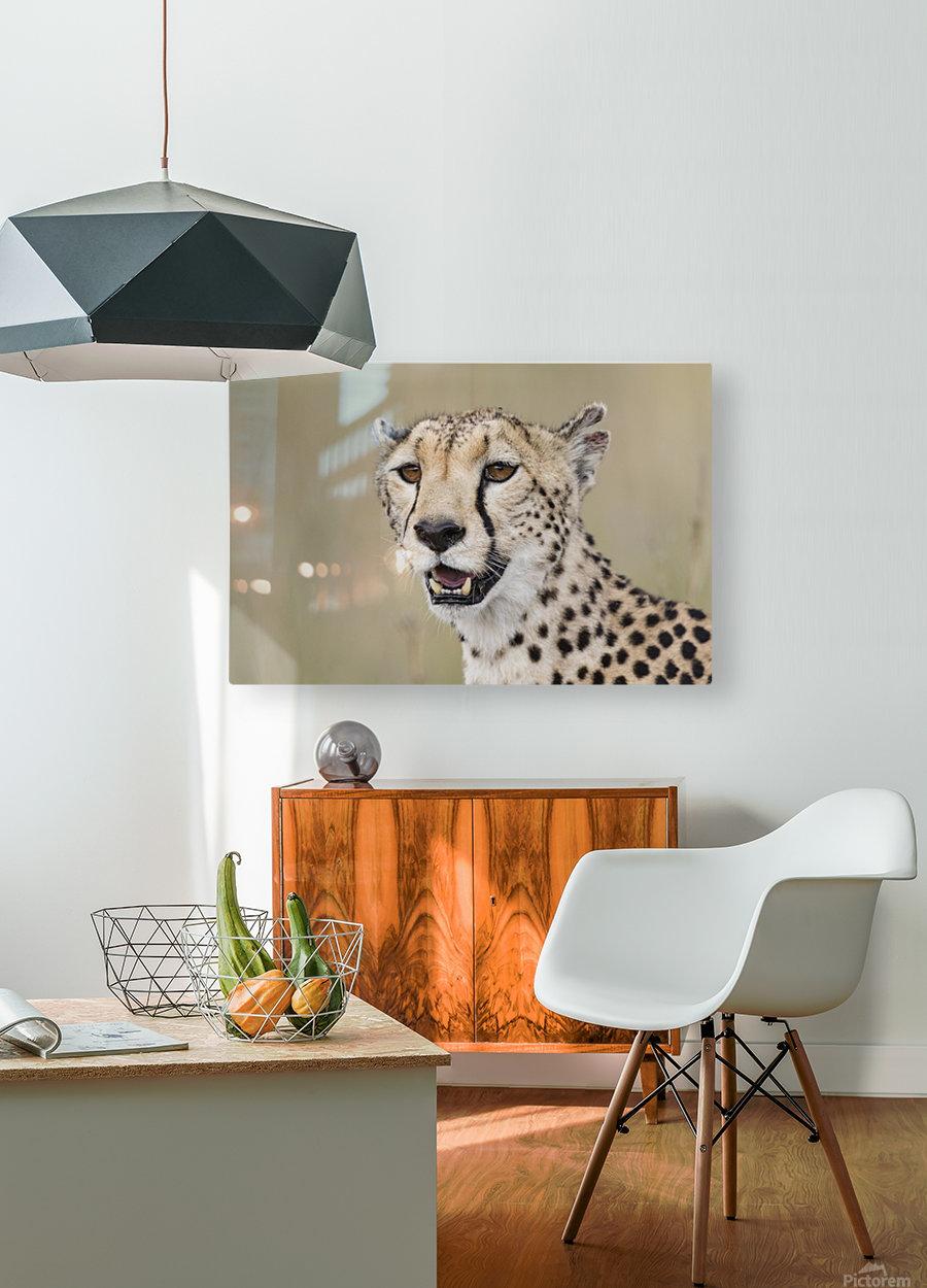 Cheetah Portrait by www.jadupontphoto.com  HD Metal print with Floating Frame on Back