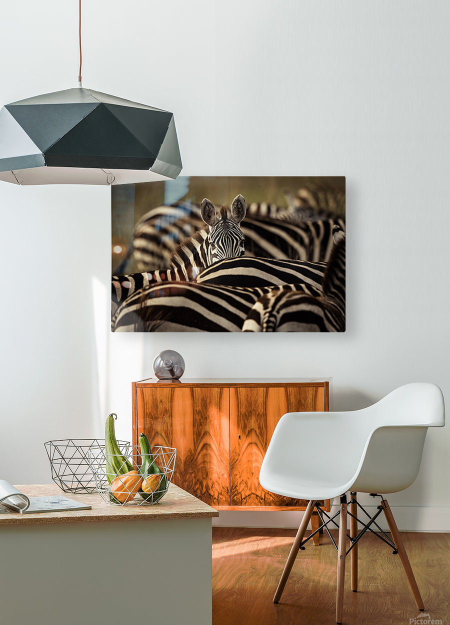 Between the Lines - Color by www.jadupontphoto.com  HD Metal print with Floating Frame on Back