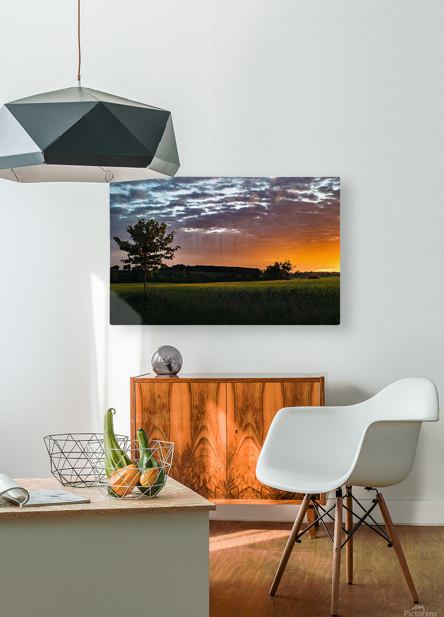 Morning Field  HD Metal print with Floating Frame on Back