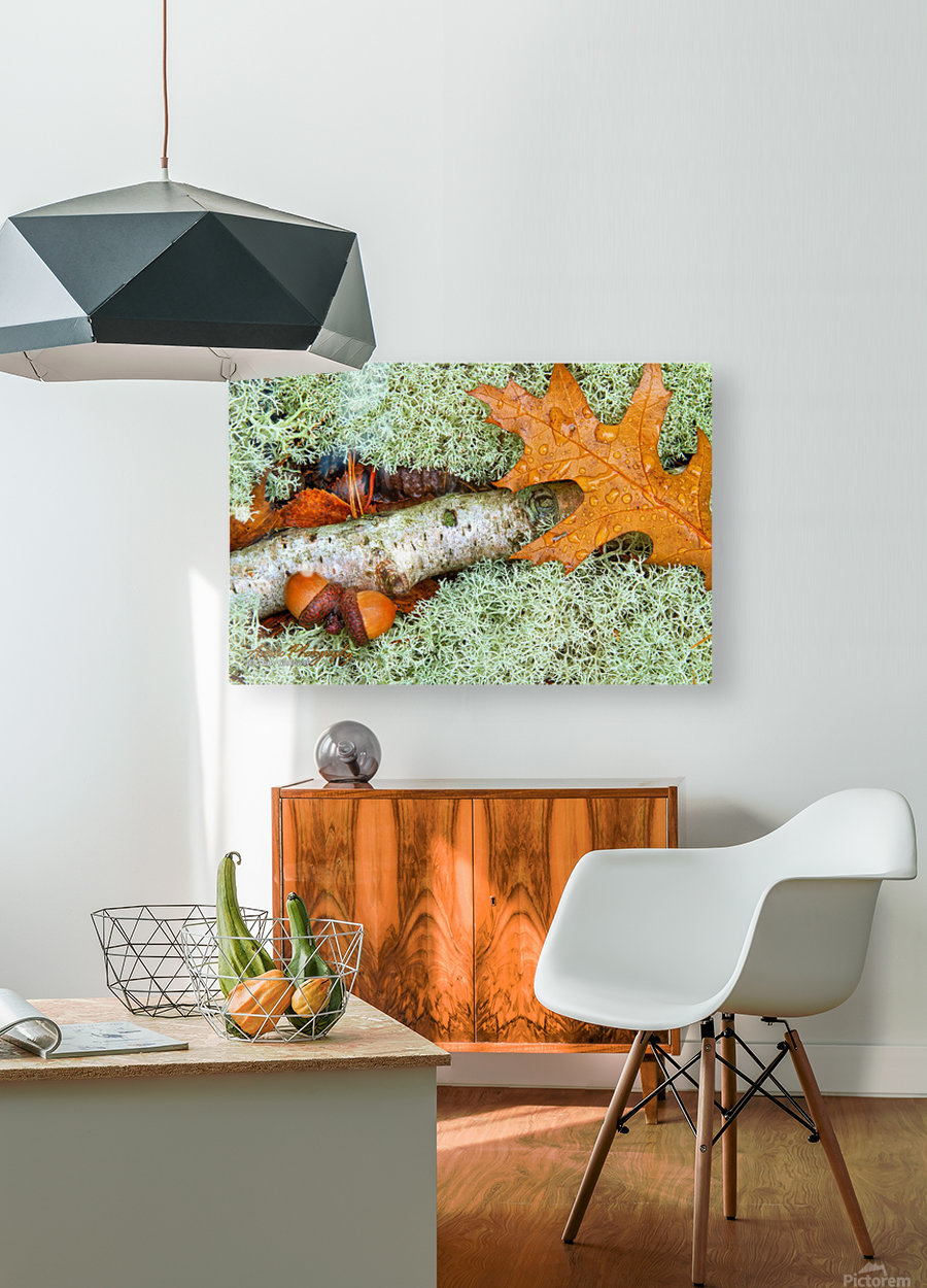 Pin Oak - APC-118  HD Metal print with Floating Frame on Back