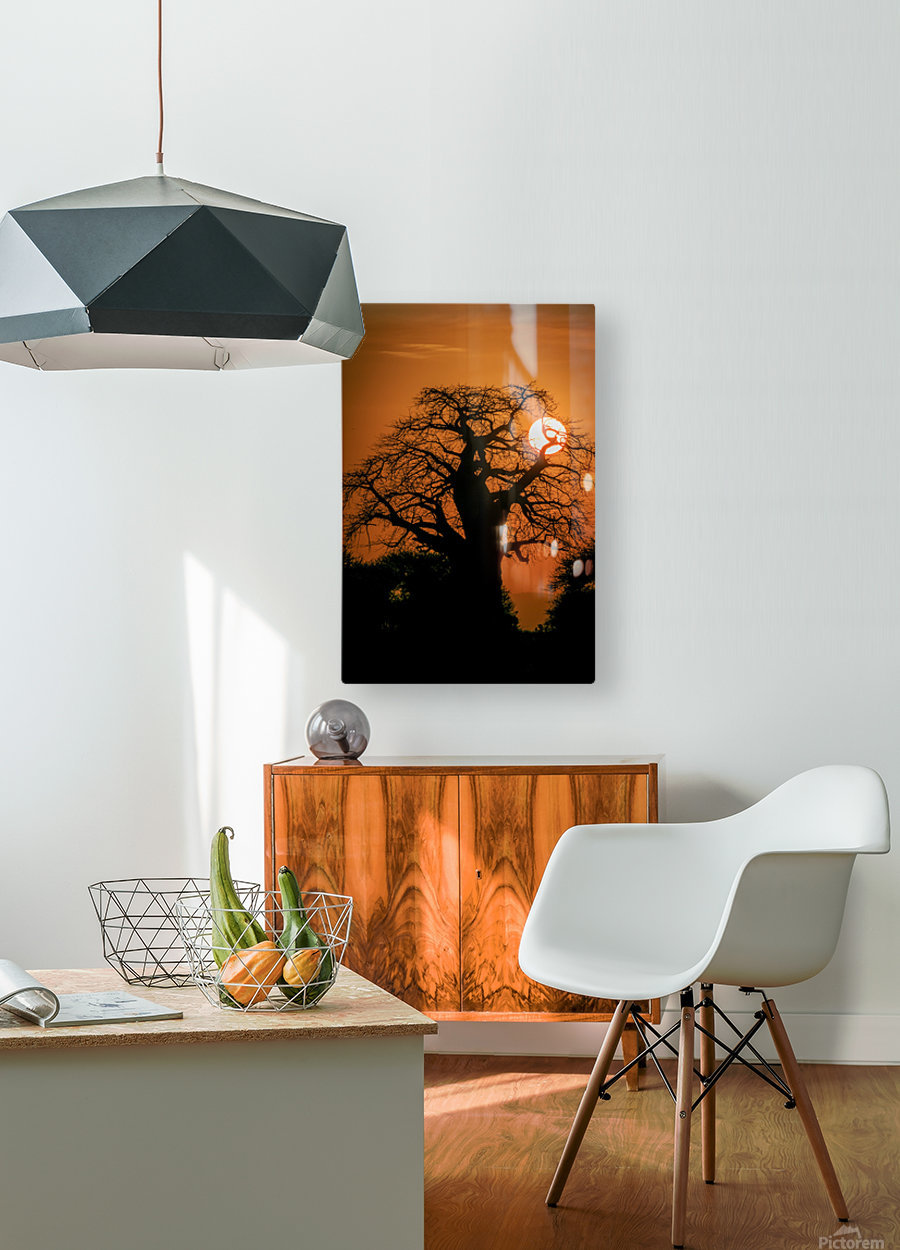 Baobab Sunset  HD Metal print with Floating Frame on Back
