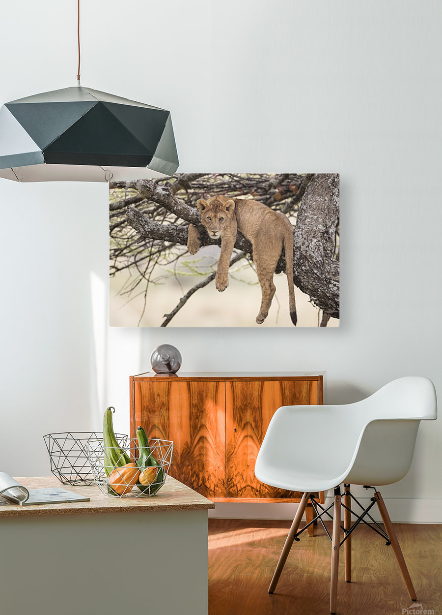 164A0128  HD Metal print with Floating Frame on Back