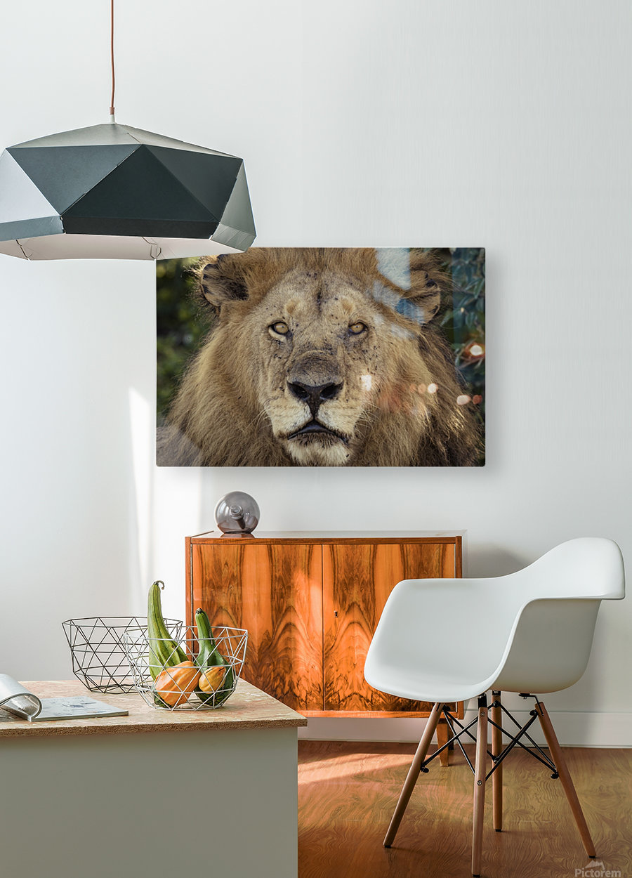 A Kings Portrait - color  HD Metal print with Floating Frame on Back