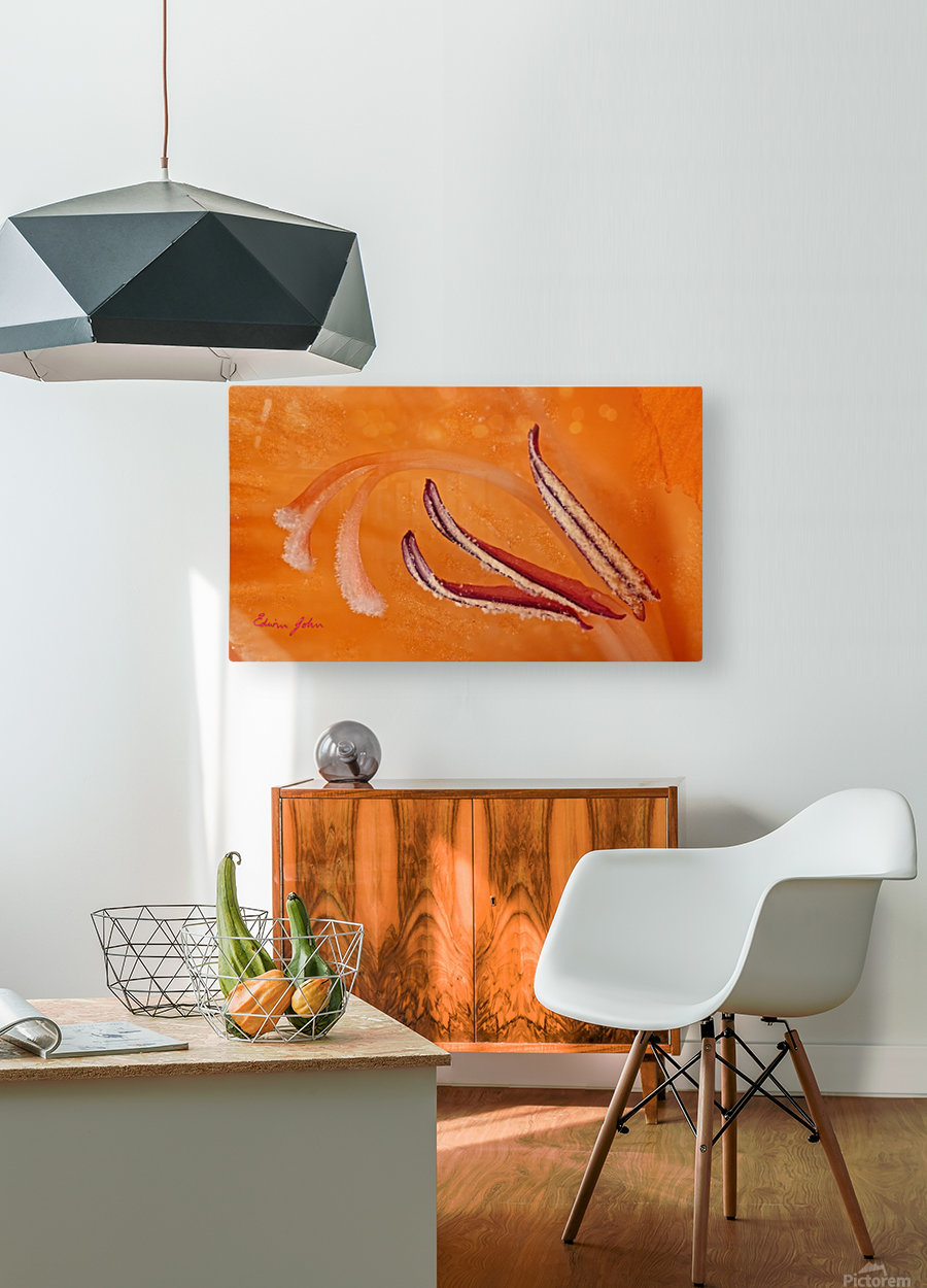 Orange Gladiola Ultra Close Up of Stamens  HD Metal print with Floating Frame on Back