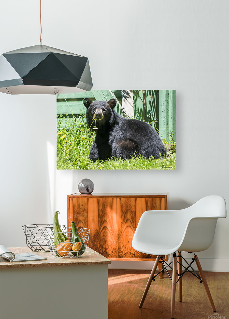 1 3  HD Metal print with Floating Frame on Back