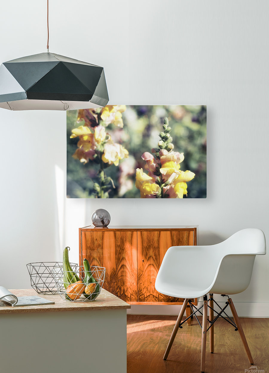 Lupinus Luteus Yellow  HD Metal print with Floating Frame on Back