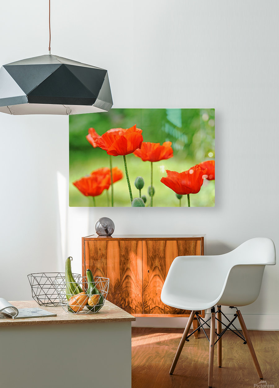 Morning Light Poppies  HD Metal print with Floating Frame on Back