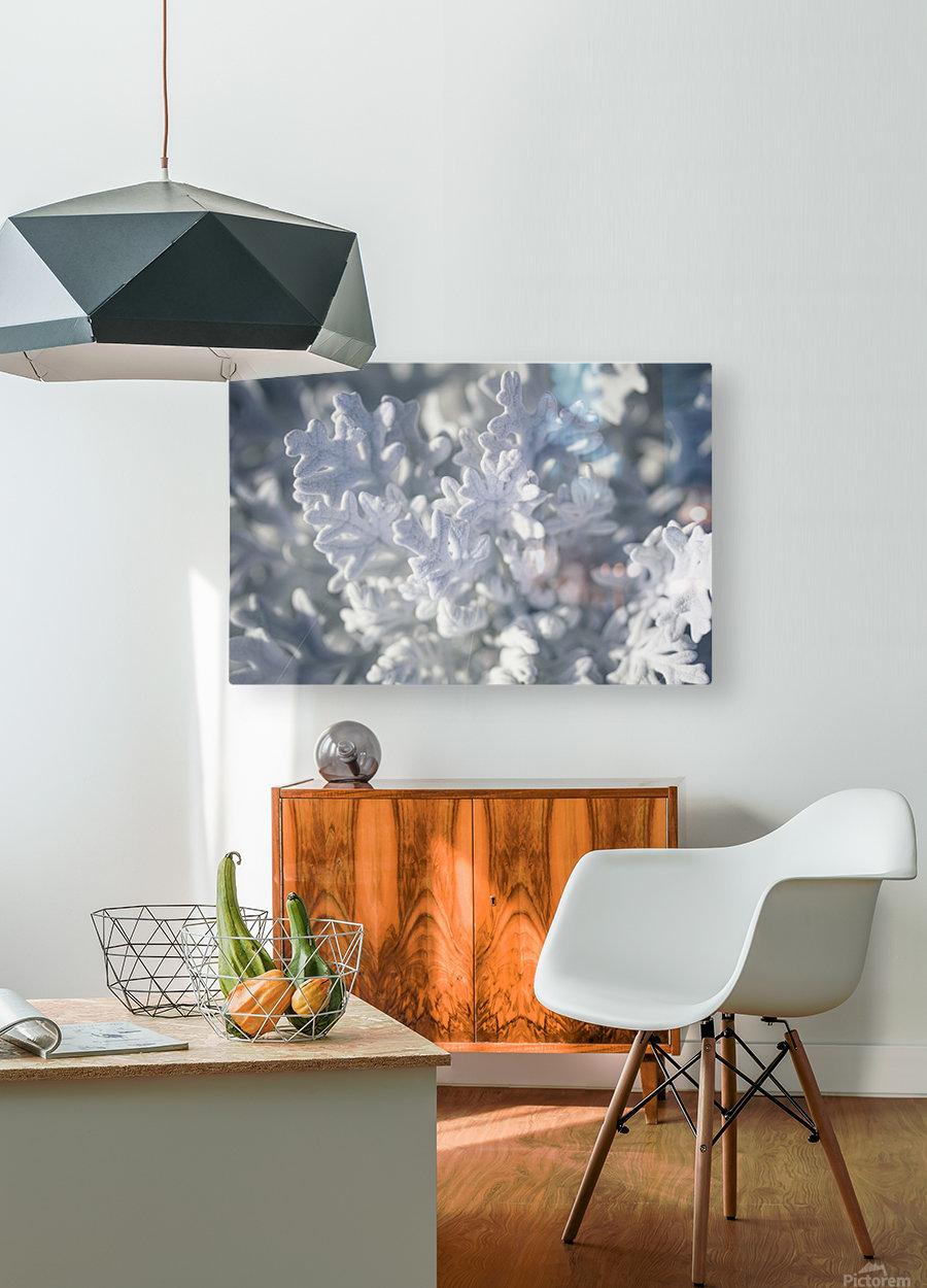 Seaside Cineraria  HD Metal print with Floating Frame on Back