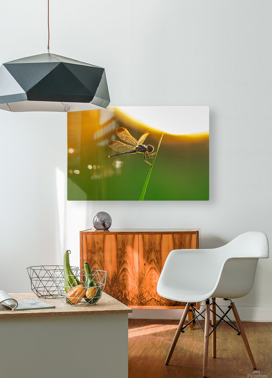 Dragonfly perching on grass twig  HD Metal print with Floating Frame on Back