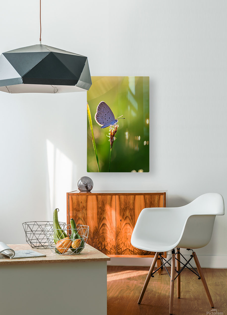 Gray butterfly perching on grass flower  HD Metal print with Floating Frame on Back