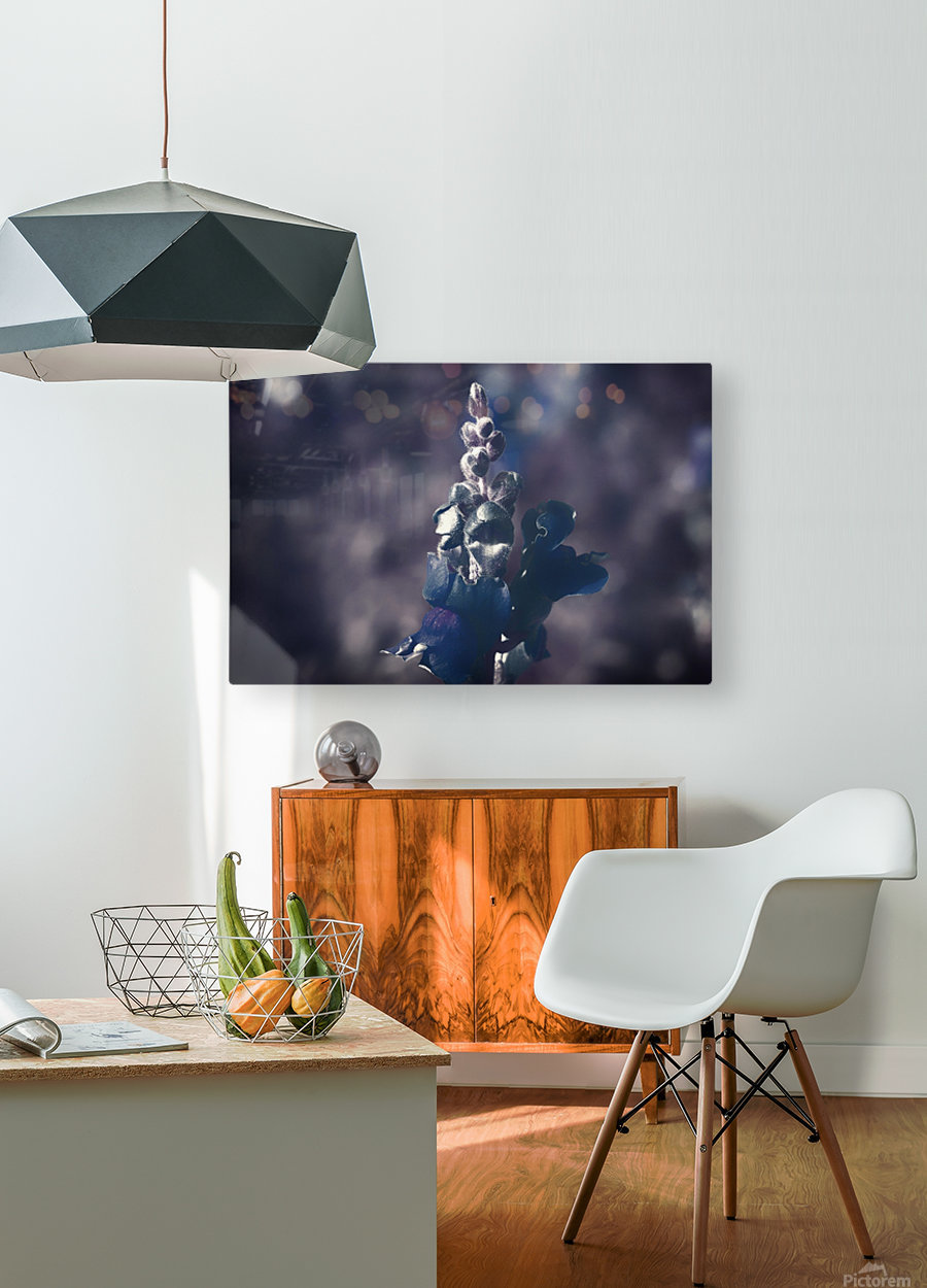 Lupinus luteus Dark Blue  HD Metal print with Floating Frame on Back