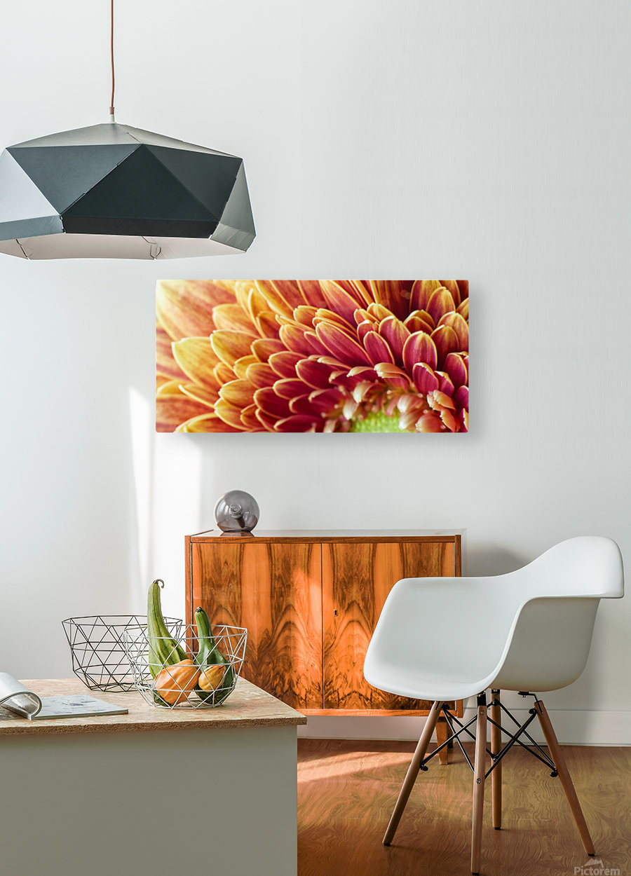 Golden Chrysanthemum  HD Metal print with Floating Frame on Back