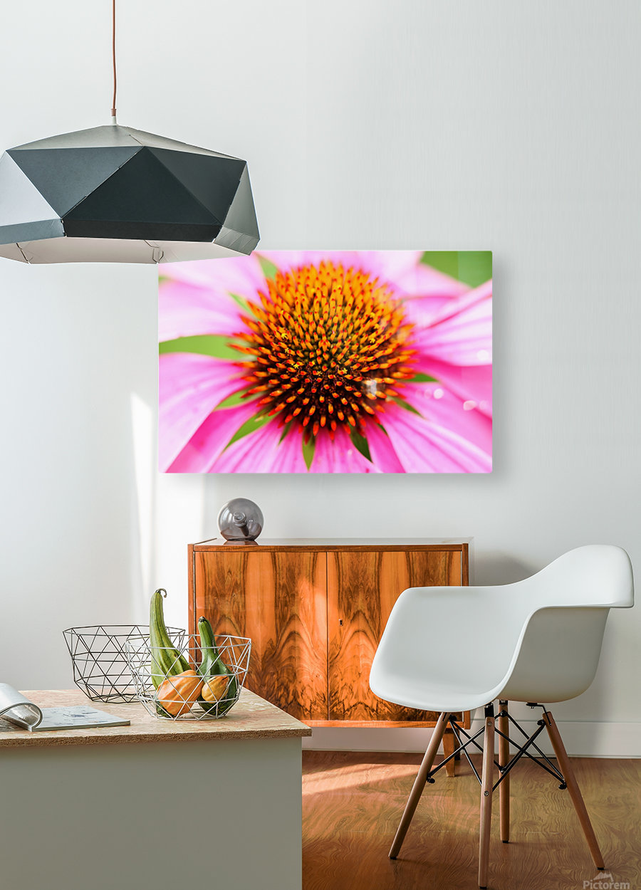 Hedgehog Coneflower  HD Metal print with Floating Frame on Back