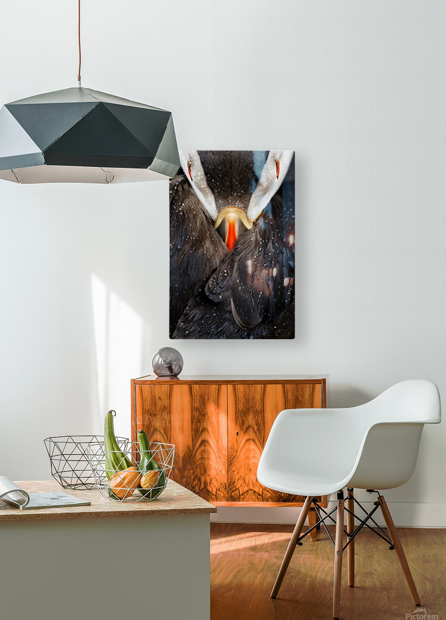 Puffin studio  HD Metal print with Floating Frame on Back