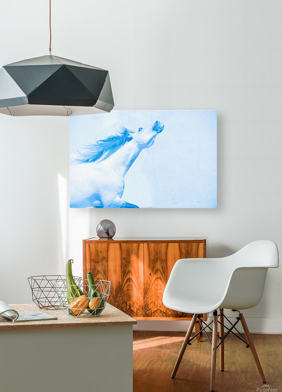 Blue Andalusian Horse 4  HD Metal print with Floating Frame on Back