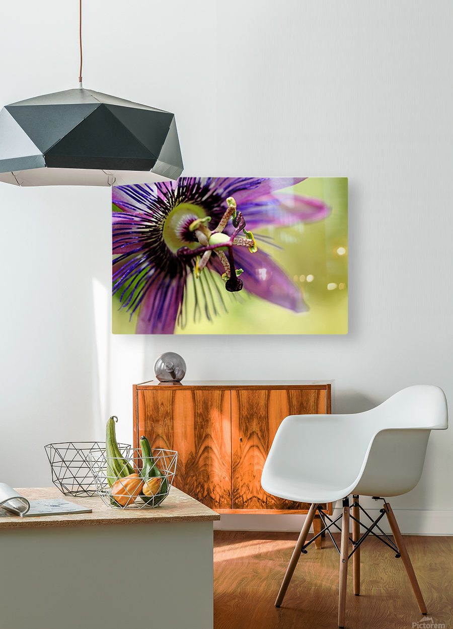 Purple Passion Flower  HD Metal print with Floating Frame on Back