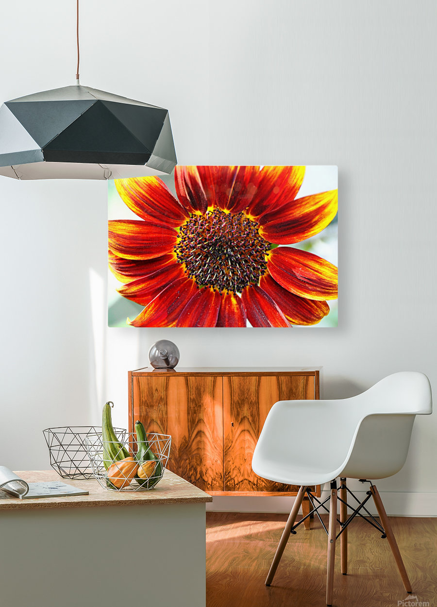 Autumn Sunflower  HD Metal print with Floating Frame on Back