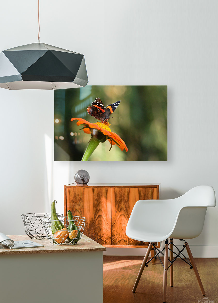 Mexican Sunflower With Red Admiral  HD Metal print with Floating Frame on Back